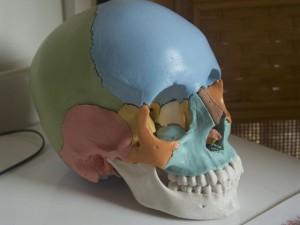 肩こりの原因は頭蓋骨の歪みです