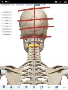 頭がい骨とひざ